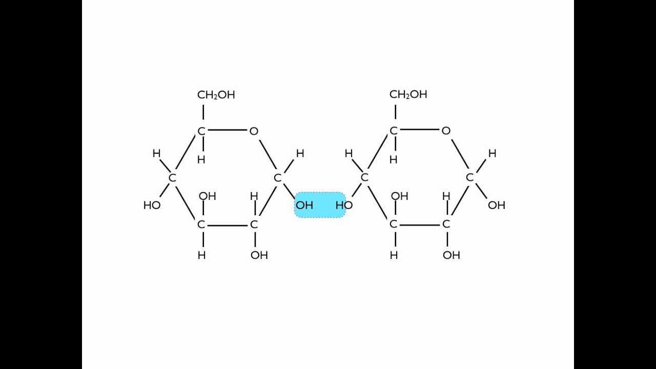 Adp Molecule Diagram Labeled Whirlpool Dryer Heating Element Wiring Hydrolysis Of Maltose Youtube