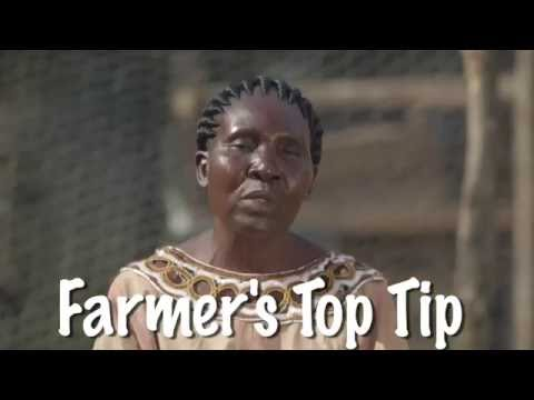 Shamba Shape Up Sn 06 - Ep 13 Ducks, Cassava, Sorghum (English)
