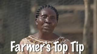 Shamba Shape Up Sn 06 - Ep 13 Ducks, Cassava, Sorghum (English)