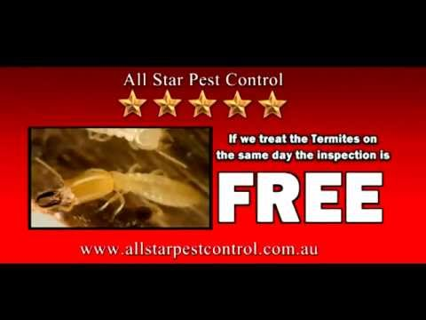 All Star Pest Control Newcastle Hunter Central Coast Treatment