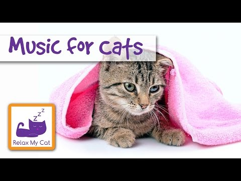 Music for Cats - 30 minutes - Relaxing Music for Cats and Kittens