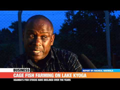 #PMLive: Cage Fish Farming On Lake Kyoga