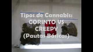 Clases de Cannabis: CORINTO VS CREEPY