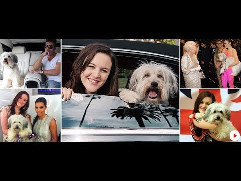 Pudsey the dog dead: Britain's Got Talent star dies... owner Ashleigh posts....