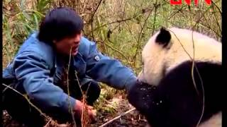 回家 - 大熊貓高高 ( Giant Panda Gao Gao Returning Home)