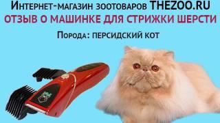 Отзыв: Игорь Анатольевич, машинка Codos CP-8000, персидские коты
