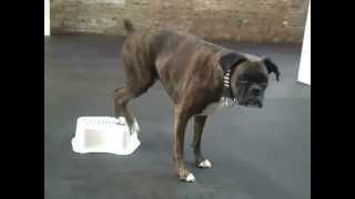 Dog Star Tricks Class - Chicago Dog Training