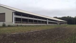 Bohnert Jersey Dairy Farm