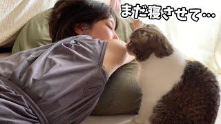 🐈寝ているママと遊びたい猫