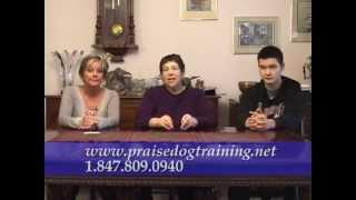 Dog Training For Fulfilling Pet Ownership