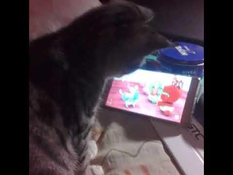 Funny cats,,watch cartoon
