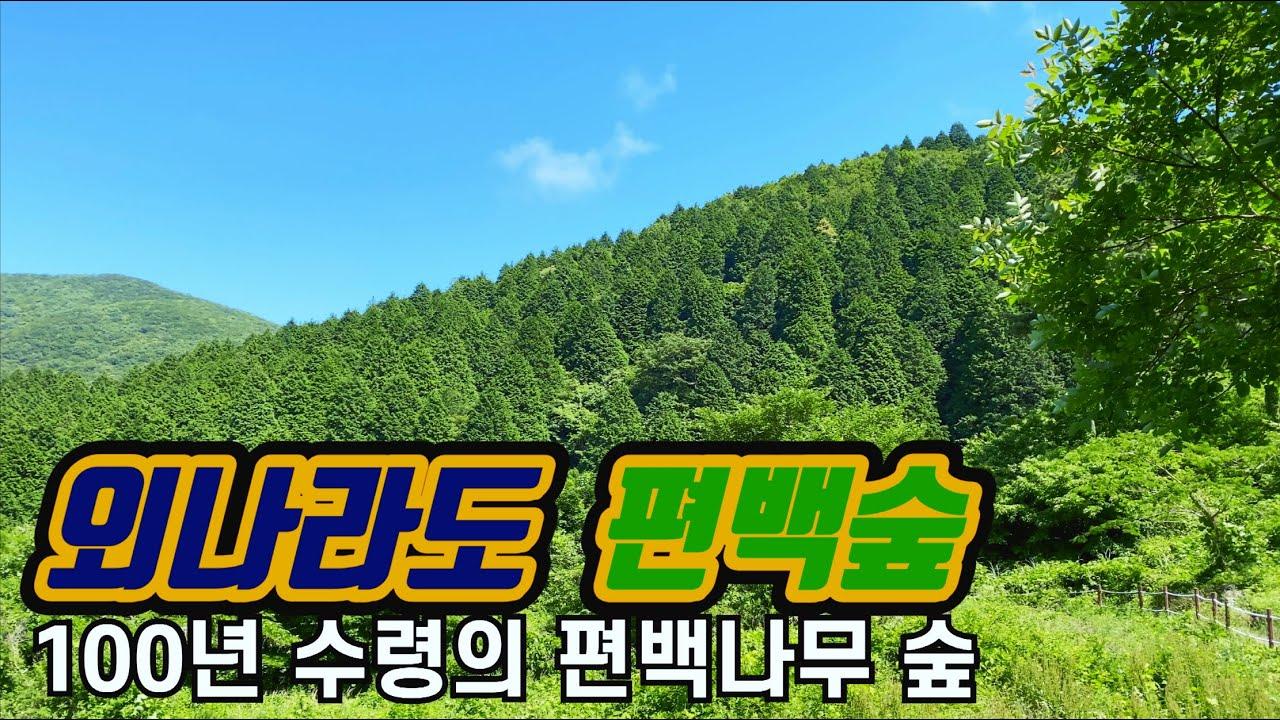 [고흥 가볼만한곳 #1] 고흥 외나로도 편백나무숲 | 봉래산 편백나무숲 | 100년된 편백과 삼나무숲 | 전라도여행