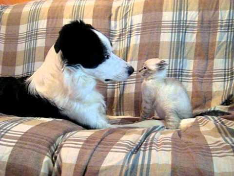 Cane e Gatto - Dog and Cat - Hund und Katze - chien et chat