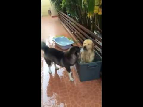Cat and dog funy videos 1