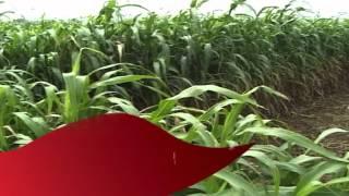 Kalpasar Project: A Short Film