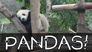 PANDAS! Visiting China