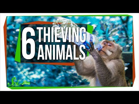 6 Animals That Have Evolved to Steal