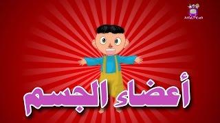 Human Body Parts In Arabic - Atfal TV | أعضاء الجسم باللغة العربية - أطفال تيفي