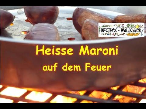 Infothek Waldkinder Heisse Maroni Auf Dem Feuer Selber Machen