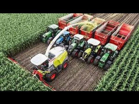 Как комбайн собирает кукурузу