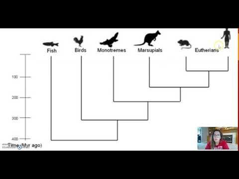 Phylogenetic Tree Interpretation