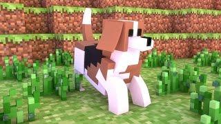 Cães de Raça! - Fazenda #27