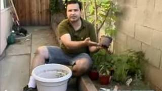 Organic Vegetable Gardening Tips : Soaking Plants: Organic Vegetable Gardening Tips & Ideas