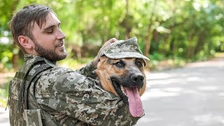 Dogs Welcoming Soldiers Home Compilation (2016)