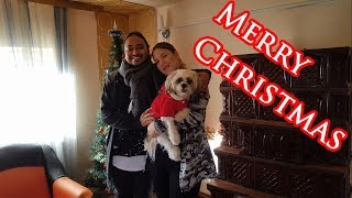 Puppy's First Christmas | Christmas Gifts