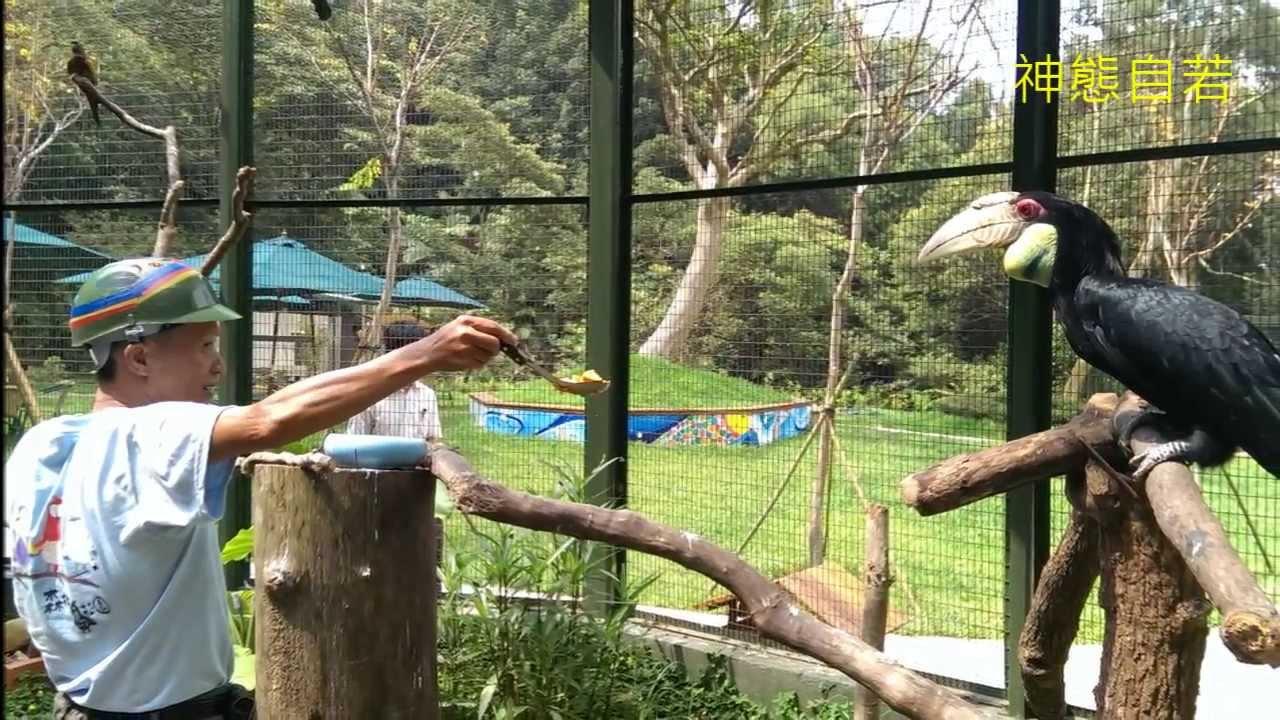 平鎮會館 森林鳥花園一日遊 - YouTube