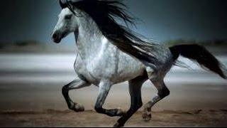 Something Wild || Equestrian Edit ||