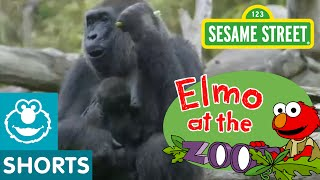 Sesame Street: Elmo Spends The Day With Zoo Animals (Elmo At The Zoo)