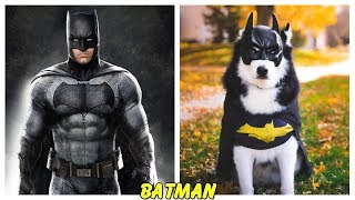 Superheroes Characters in Real Life Dogs
