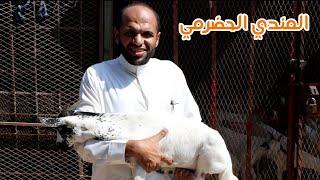 المندي الحضرمي من بلاده الأصلية أسرار وخفايا #حضرموت