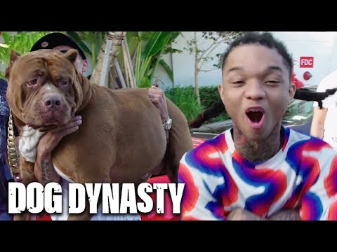 Swae Lee Battles Hulk In Miami | DOG DYNASTY