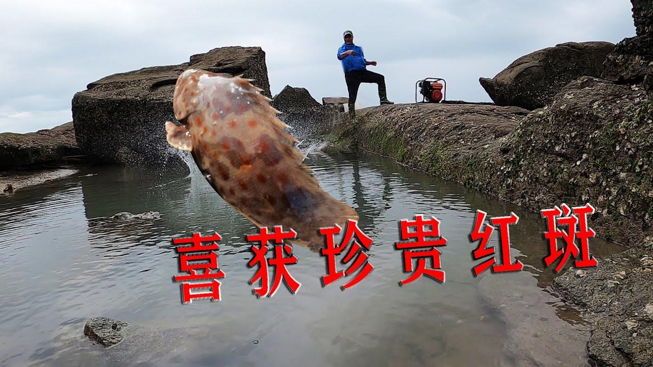 80米长10米宽巨石坑撒80斤牛血,喜获珍贵红斑和鲨鱼,这下赚翻了