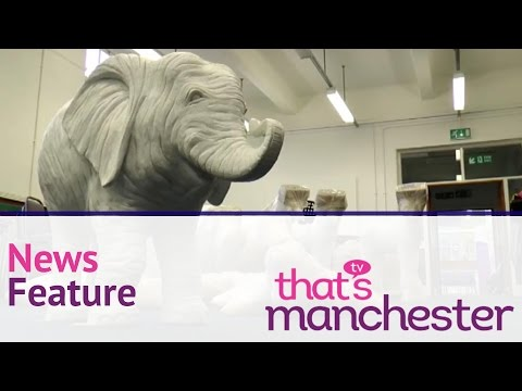 Animals went in two by two  - Manchester Headline News