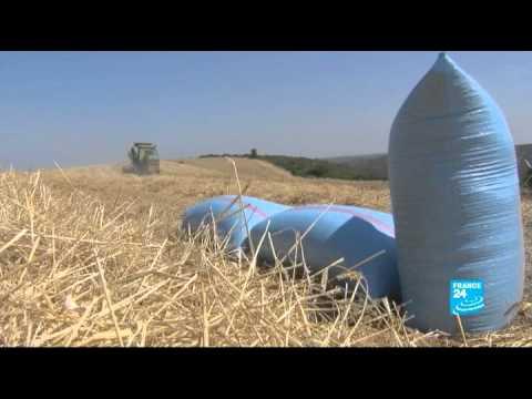 L'agriculture Marocaine Intéresse Le Qatar - FOCUS - 10/07/2013