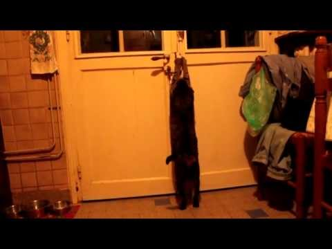 Smart Cat Open Door