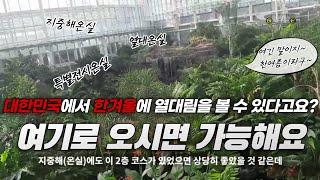 #064. 봉고3코치 대한민국에서 열대림 볼 수 있는 …