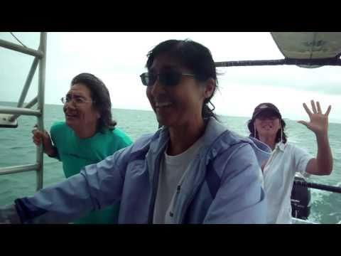 North Shore Molokai Boat Tour Sea Cliffs Halawa Wailau Pelekunu Valley Kalaupapa