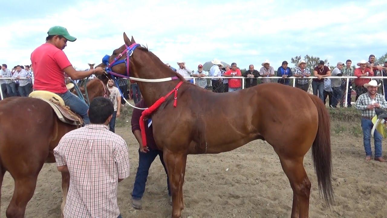 videos carreras caballos