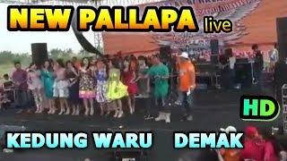 New Pallapa Full Album Special  2017 Live' Kedungwaru Demak