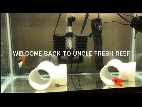 How I Quarantine Saltwater Fish