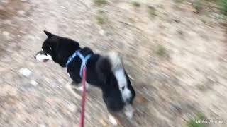 カイが散歩行きましたが、風が強すぎました.