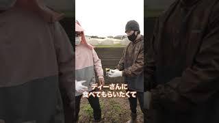 【芋】マッスルグリルファームの芋を食べると!?