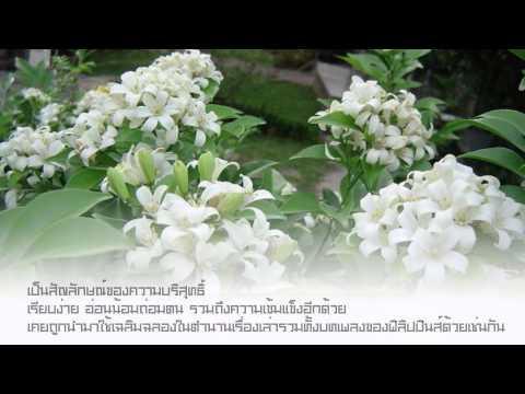 ดอกไม้ประจำประเทศสมาชิกสมาคมอาเซียน