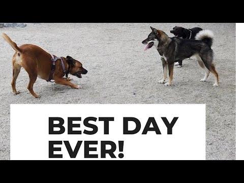 DOG PARK visit for Shikoku Dog!