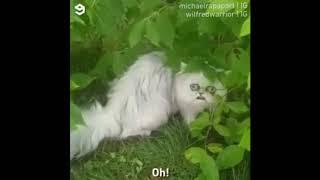 Странный кот - все видео