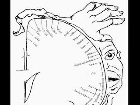 Brain Mind Lecture 4 Parietal Lobes Body Image Phantom Limbs
